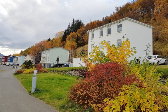 As we are traveling in the north of Iceland and staying in Akureyri, we noticed that the autumn is exceptionally beautiful