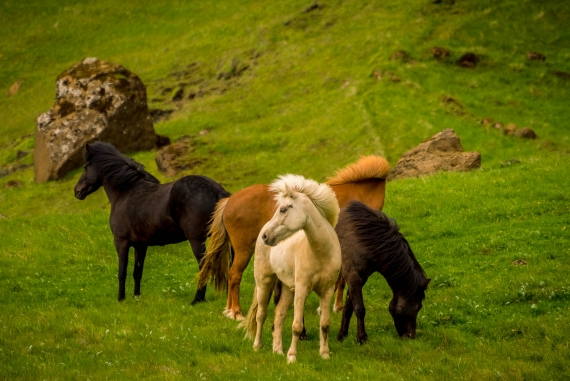 Beautiful horses are almost part of the landscape