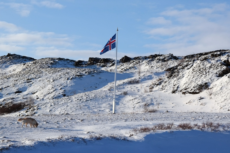Thingvellir is a very suitable place for the Icelandic flag