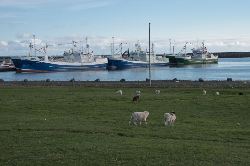 Grindavík is a very active fishing town