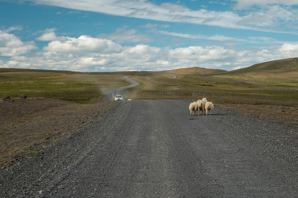 There are many things to consider - one of many is sheep on the road