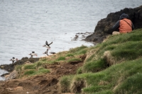 The popularity of the puffin as an item to view has increased considerably in recent years