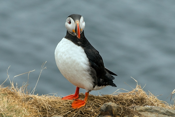 The island is renowned for its birdlife and is a good place to see puffins among other species up close.