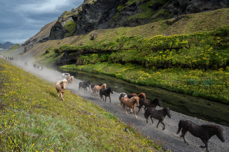 Overall most of the animals in Iceland are a significant addition to the landscape.