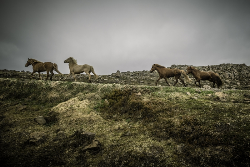 Hólar is also home to the Center for the History of the Icelandic horse.