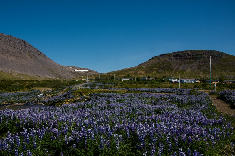 Tálknafjörður is a small village in the West Fjords in Iceland